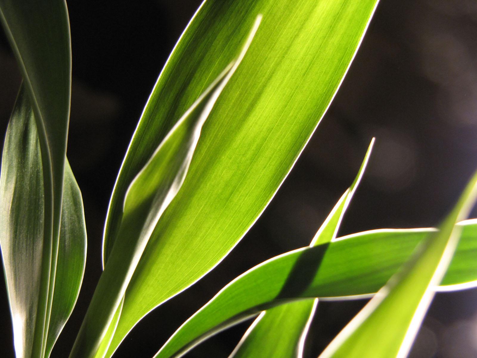 Another bamboo closeup
